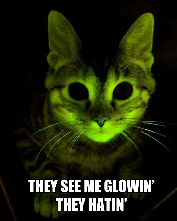 Glowing Cat 2